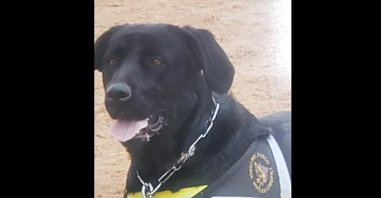 Addio a Tommy, il cane eroe dei terremoti