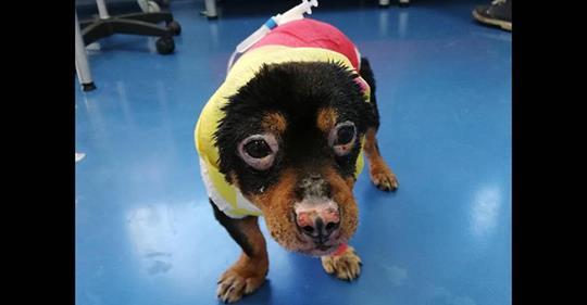 Cane bruciato vivo a Sassari: dottori gli salvano la vista