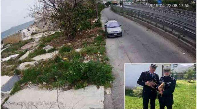 Tunisino lancia cuccioli dal finestrino, individuato – FOTO
