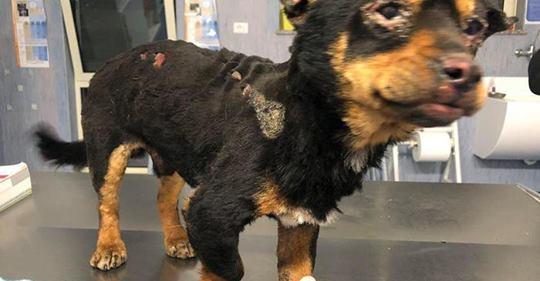 Cane legato e bruciato vivo dai soliti ignoti