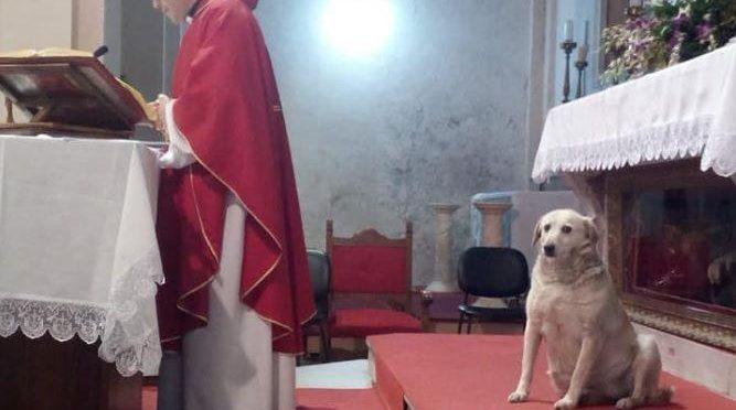 Parroco dice messa con a fianco un cane invece del solito barcone