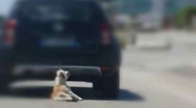 """Cane trascinato con l'auto a Barletta, Salvini: """"Bestia umana deve pagare"""""""
