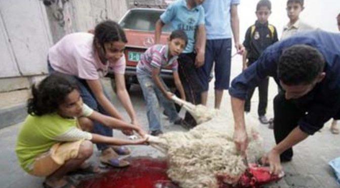 Festa islamica del Sacrificio, animali torturati in tutta Italia