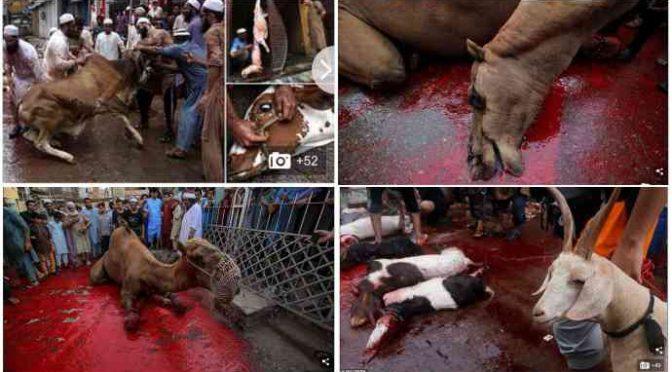 Bagno di sangue islamico: animali sgozzati per strada – FOTO
