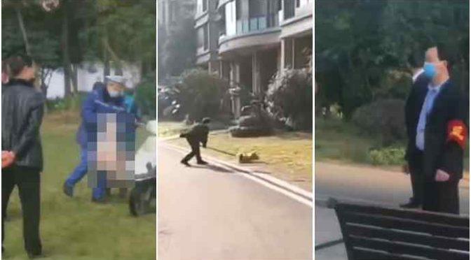 Coronavirus, cinesi ammazzano i cani a bastonate per strada: è strage – VIDEO