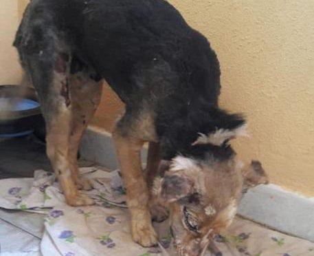 Stella, cagnolina torturata col fuoco da bestie umane: torna a casa