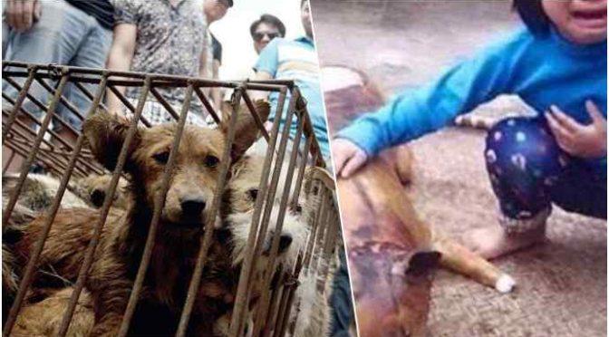 Ogni anno mangiano 20 milioni di cani e si offendono per le parole di Zaia?