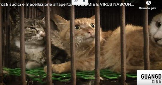 "Coronavirus, riaprono i mercati ""horror"" di animali in Cina"