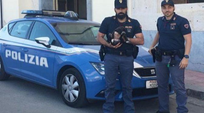 Immigrato massacra cucciolo di due mesi: salvato da poliziotti, lui solo denunciato