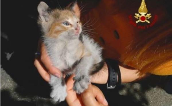 Gattino viaggia 40 km incastrato in un parafango e si salva: grazie a Dio non l'ha trovato un maliano