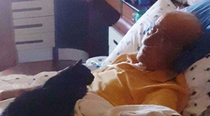 Il vecchio e la gattina morti a distanza di un giorno dopo 15 anni insieme