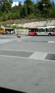 Risorsa tenta approccio sessuale con il bus – VIDEO