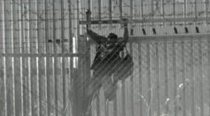 Immigrati infetti in fuga irrompono nelle case degli italiani – VIDEO