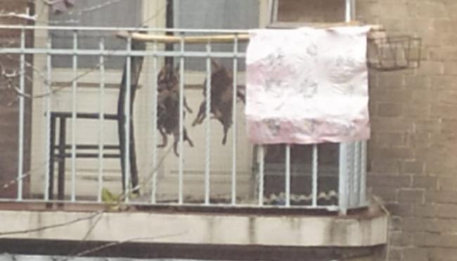 Animali impiccati al balcone africano per cucinarli: polizia 'tranquillizza'