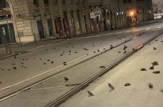 Botti di Capodanno fanno strage di uccellini a Roma