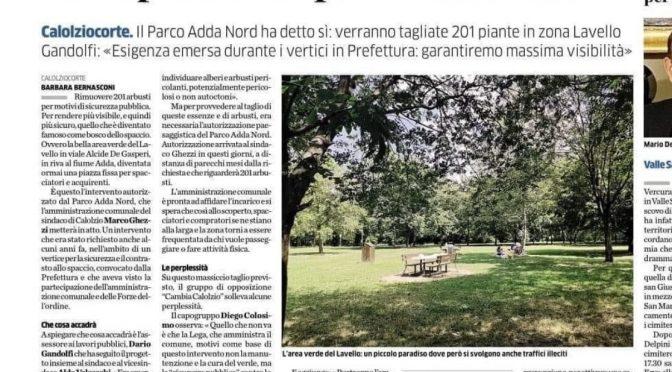Troppi spacciatori al parco: sindaco sradica gli alberi dove si nascondono