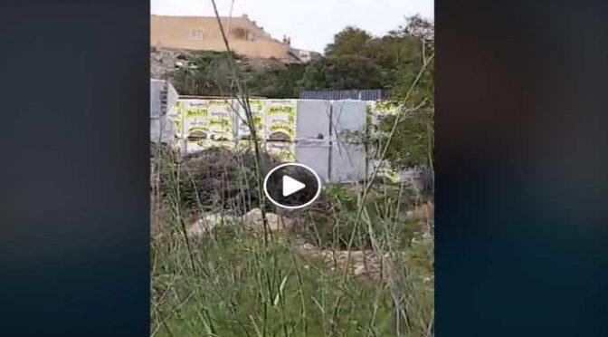 Governo invia centinaia di pacchi ai clandestini di Lampedusa: preparano l'invasione – VIDEO CHOC