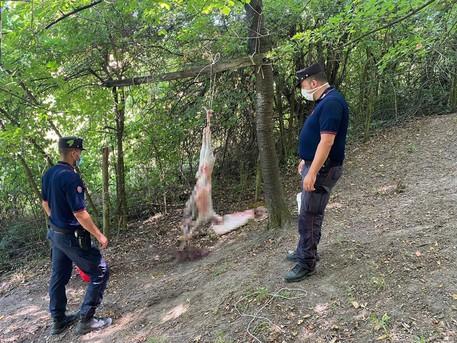 Carabinieri trovano islamici mentre sgozzano animali nel bosco
