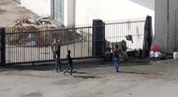"""Scontri tra immigrati: """"Il quartiere è nostro"""" – VIDEO"""