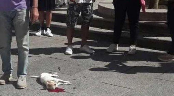 Accoglie un migrante, lui le ammazza il cagnolino: «Poi ha tentato di violentarmi»